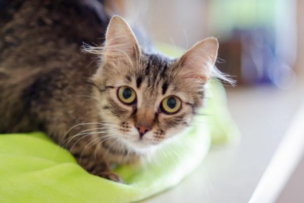 fotograf kotów łódź kot na kocyku na blacie wpatrzony w obiektyw