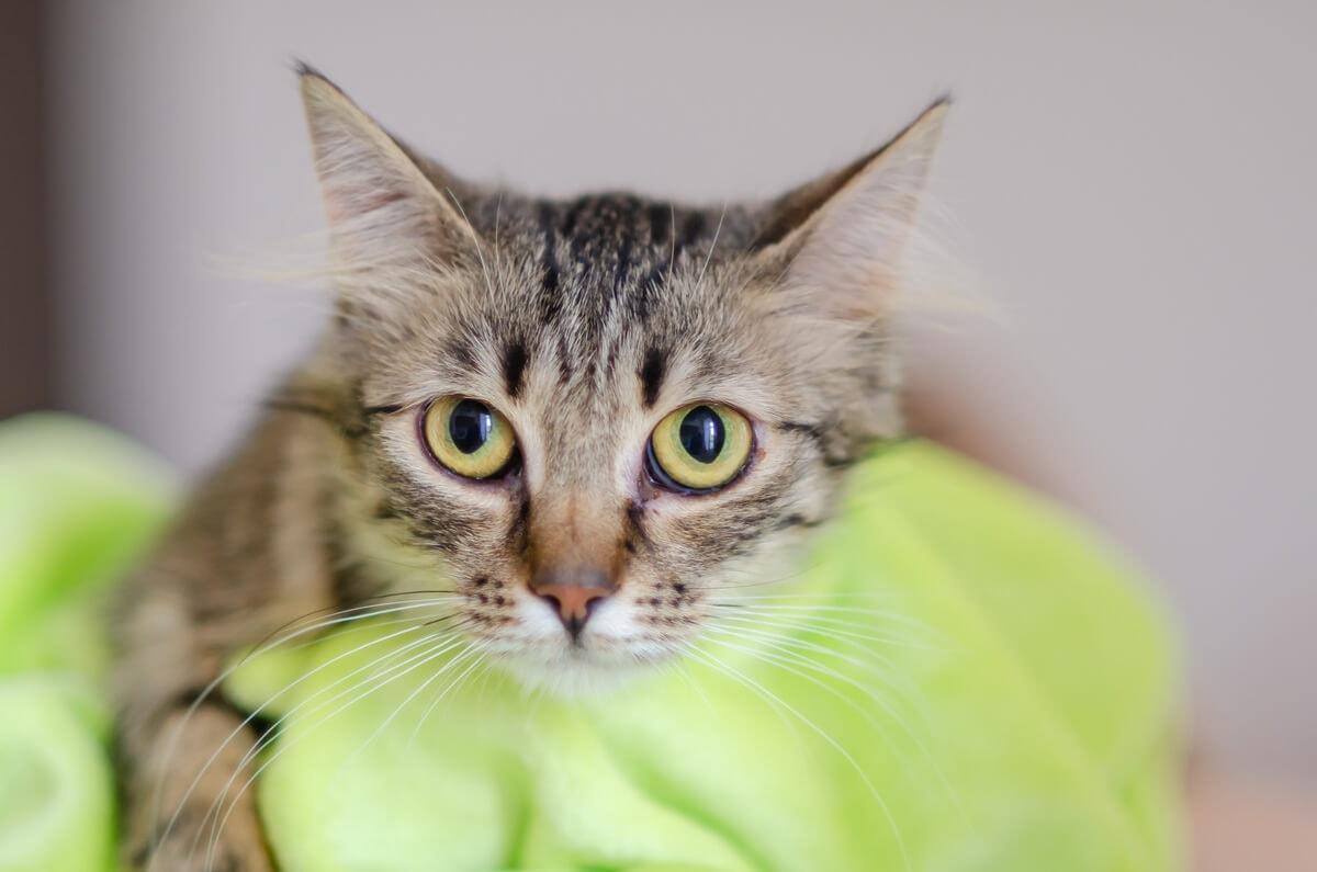 fotograf kotów łódź kot wpatrzony w obiektyw na kocu