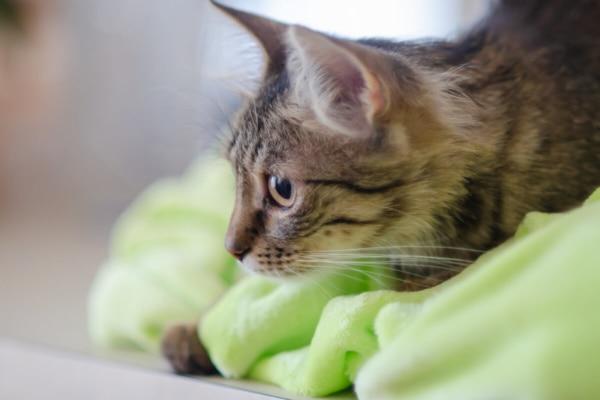 fotograf kotów łódź kot na zielonym koc z boku