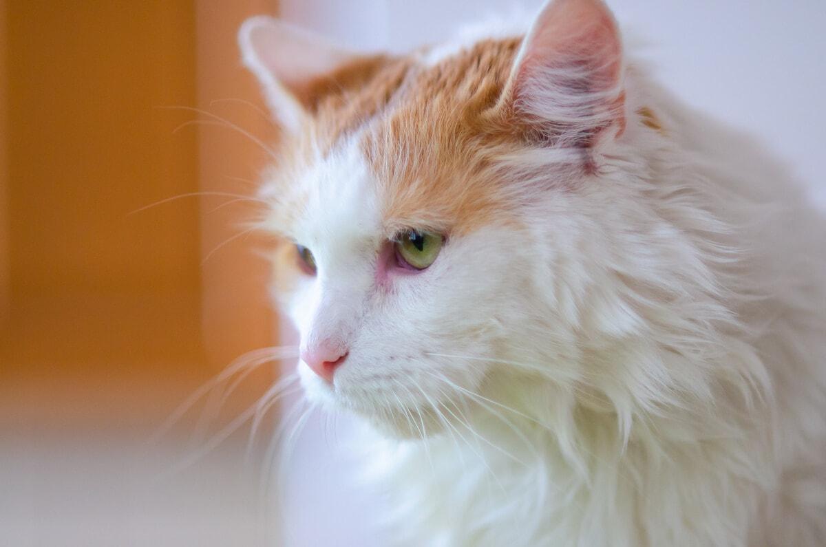 fotograf kotów łódź sesja kota domowa