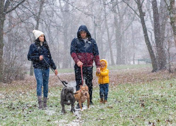 zimowa sesja rodzinna z psami fotograf rodzinny łódź rodzina na spacerze z psami i synem trzymającym tatę