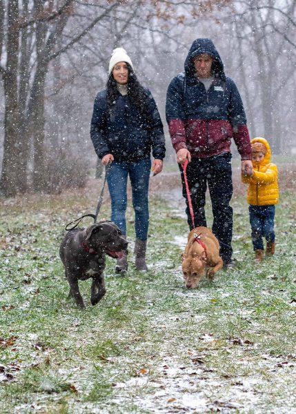 zimowa sesja rodzinna z psami fotograf rodzinny łódź rodzice na spacerze z psami i dzieckiem