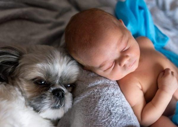 sesja noworodkowa w domu Łódź chłopiec śpi a obok leży pies